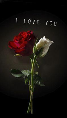 I love you roses Love Rose Flower, Beautiful Rose Flowers, Beautiful Love, Love Flowers, Cute Love, I Love You Images, Love You Gif, Emoji Love, Good Morning Love