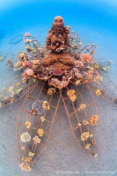 vvv The Coral Goddess