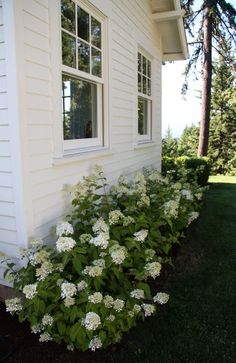 A Country Farmhouse: East End Profile: Before and After Little lamb hydrangea