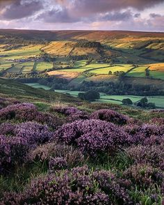 Yorkshire, England by clare