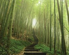 JP London MD4A108 85Feet High by 105Feet Wide Removable Full Wall Zen Bamboo Stairs Mural *** Read more reviews of the product by visiting the link on the image.