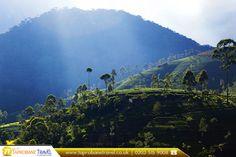 Maskeliya, Sri Lanka  |  Travel with our Exclusive Offers: https://www.taprobanetravel.co.uk/   |  #traveller 💃 #travelling 🐾 #srilanka #maskeliya #greenteaplantationlandscape #wanderlust #cheapflightstosrilanka #asia #bookcheapflights #booknow 💻 #callnow 📞 #cheapflights #travels #traveldiaries #traveladdict #travelpics #travelblogger #travellife #travelphoto 📷 #travelblog #travelstoke #travelawesome #travelbug #travelyear2016 #taprobanetravel ✈