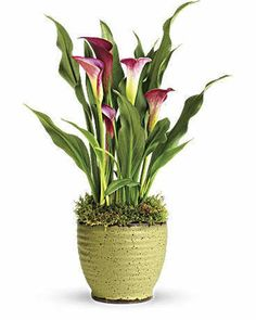 Corporate flowers in USA by Sendflowersandmore. Send corporate flowers,business flowers online to your colleagues, competitors for any event celebration. Plant Delivery, Flower Delivery, Fast Flowers, Send Flowers, Organic Gardening Magazine, Cheap Plants, Christmas Plants, Flower Pot Design, Gardens