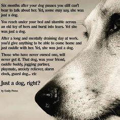 Just a Dog .... by Emily Perez. #Ryder_Kennel #RyderKennel #Dog #EmilyPerez #poem #ode #canine #ilovedogs #ilovemydog #quote