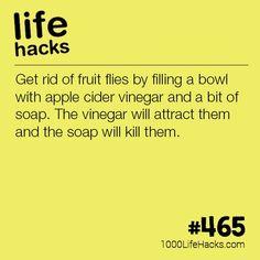 Get Rid of Fruit Flies This Summer – 1000 Life Hacks – lifehacks