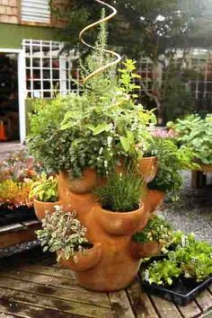 Oh, want. My own lil' grocery store of herbs. For near the entrance of the porch. Love the spiral which makes the whole thing look like a Christmas tree.