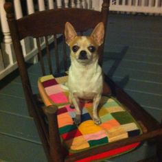DIY dog bed, Just take a regular ol' chair  or small wooden crib, and cut the legs to desired length and put a cushion in place and let your doggie enjoy!!! Remember to add wheels if you plan on moving it around!