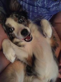 My good girl Roxy!   http://ift.tt/2oBpllz via /r/dogpictures http://ift.tt/2nwkuA0  #lovabledogsaroundtheworld