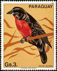 Red-breasted Blackbird stamps - mainly images - gallery format
