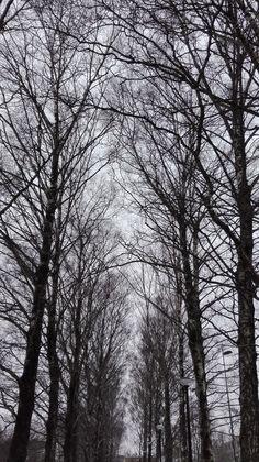 Mi invierno a lo costeño... calientico, ¡NOJOÑE! Trunks, Plants, Winter, Drift Wood, Tree Trunks, Plant, Planets