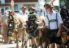 Crowned and feathered Cattle Drive, Weekend Deals, Travel Guide, Celebrations, Germany, Animals, Beautiful, Animales, Animaux