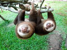 An Inside Look At What It's Like To Be Surrounded By Sloths