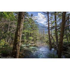 【minnano_tozanbu】さんのInstagramをピンしています。 《【絶景】上高地 ~癒しの森~  明神池から梓川に沿って暫く森を歩くと河童橋の手前で急に視界が開ける場所がありました。餌を探しているのか沢山のカモが川の中に頭を突っ込みお尻だけをプカプカ浮かして並んでいる姿がユーモラスでカワイかったです。青い空と森の木々、沢の水が一体となったここは癒しの空間ですね。 撮影日時:2013年8月13日 撮影場所:上高地 徳沢 ©木谷基一  #上高地 #穂高 #梓川 #河童橋 #川 #森 #沢 #水 #Facebook #ハイキング #トレッキング #ウォーキング #アウトドア #登山 #山登り #山 #風景 #絶景 #写真 #自然 #日本 #mountain #beautiful #beauty #nature #photo #japan #みんなの登山部》