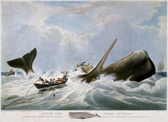 South Sea Whale Fishery by William John Huggins