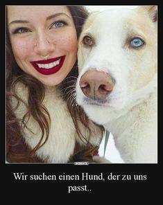 Wir suchen einen Hund, der zu uns passt..   Lustige Bilder, Sprüche, Witze, echt lustig