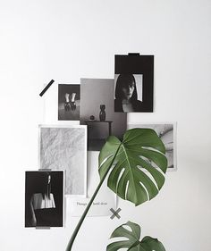 Minimalist decoration with a monstera plantMinimalistische Deko mit einer Monstera Pflanze