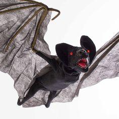 Europalms Halloween 8331465R Fledermaus FREDDY mit schaurigem Lachen und Bewegungsfunktion, LEDs, 125cm - Blutsauger / Horror Party - Fliegende Fledermaus mit Licht-, Sound-, und Bewegungseffekten ¨Aufhängbare Fledermaus mit animierten Flugbewegungen ¨Bewegliche Flügel und Kopf durch integrierten Motor ¨Blinkende rote LED-Leuchteffekte in den Augen ¨Geisterhafter Soundeffekt durch integrierten Lautsprecher ¨Aktivierung der Animationen per integriertem Mikrofon oder kabelgebundener Fern
