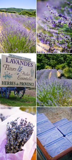 Provence - I love lavender! So want to see Provence! Lavender Blue, Lavender Fields, Lavender Flowers, Lavender Ideas, Lavender Cottage, Lavender Wreath, Lavender Garden, Lavender Soap, French Lavender