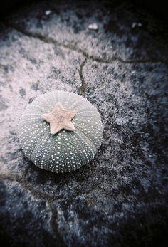 Sea Urchin. Photograph by Jelle Knüppe.