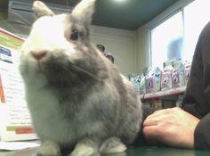 Tambor Toral #conejo #veterinario www.veterinarioexoticos.com