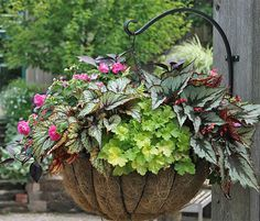 Gorgeous basket for shade - thank you Kathy LaLiberte and Gardener's Supply. This 13-inch basket contains Rex begonia, Heuchera, impatiens, Boston fern and Alternathera. Just be mindful that this lush look comes in time; if you stuff 'em tight at planting time, they may not be able to go the distance.