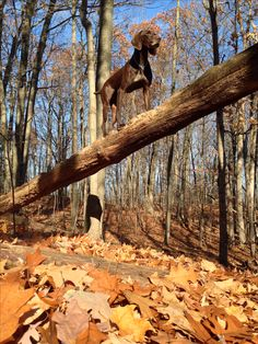 Beautiful autumn  day hike threw the forest - GSP