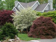 jardín frondoso