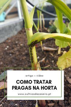 3 Fertilizantes naturais com ingredientes que todos têm em casa! Fresh Herbs, Vegetable Garden, Beautiful Gardens, Homesteading, Vegetables, Nature, Flowers, Plants, Outdoor