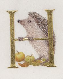 H is for hedgehog. Another delightful illustration in watercolour and gold leaf by Kathy Pickles.