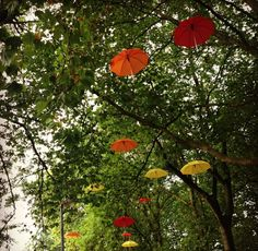 Umbrellas in the park in Manchester