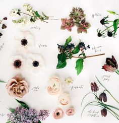 Do anything of these work with my monochromatic blue palette? Big Flowers, Types Of Flowers, Pretty Flowers, Colorful Flowers, Fall Flowers, Flowers Bucket, Wedding Bouquets, Wedding Flowers, Wedding Flower Guide