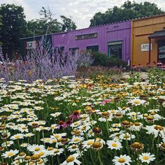 Flower Garden at Corry Street Shops
