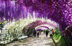 16прекрасных улиц, спрятанных втени цветущих деревьев: Кавати, Япония