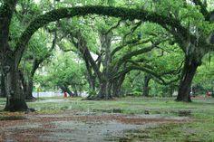 New+Orleans+City+Park   City Park New Orleans