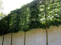 8 Easy And Effective Ways To Tighten Up The Privacy In Your Yard
