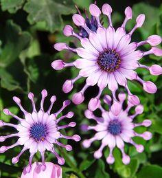 The Amazing Fresh Flowers