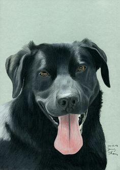 Labrador-Mischling Dexter, das Hundeportrait wurde mit Farbstiften gezeichnet.