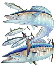 "Guy Harvey Art | Guy Harvey on ""The Wahoo"" 