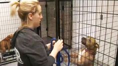 Animal Control fights Detroit Dog Rescue over who owns found dog - Fox 2 News Headlines