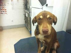 ***URGENT ON EUTH LIST WED 8-14-13***  MOBILE, ALABAMA! LANDO ID#A050924 Adorable Lando is waiting for someone to save him. Lando is a 2 year old Doberman Pinscher and Labrador Retriever mix.   Lando has been at the facility since July 25, 2013.   Mobile County Animal Shelter 7665 Howells Ferry Rd Mobile, AL 36618. https://www.facebook.com/photo.php?fbid=558536477532975=a.193103557409604.60105.193102227409737=1_count=1