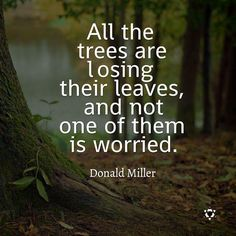 Trees quotes nature, beauty in nature quotes, tree of life quotes. Phrase Cute, Favorite Quotes, Best Quotes, Quotes Quotes, Wisdom Quotes, Qoutes, Peace Quotes, Happiness Quotes, Short Quotes