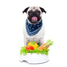 Fiber in Dog Food for Dogs with Diabetes