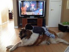 7 Pictures That Prove Dogs Are a Kid's Best Friend