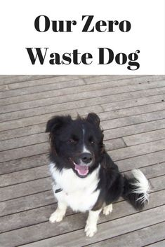 People often ask how a dog fits in with our zero waste goals, so this post outlines how zero waste is achieved with a delightful Border Collie called Maddie.