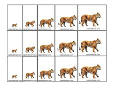 Ordonare dupa marime, grosime, lungime, culoare. Animale domestice si salbatice . Jetoane. – Catalina Bîrsan Safari Animals, Animals And Pets, Sorting Activities, Math For Kids, Small Cards, Marimo, Haiti, Montessori, Activities