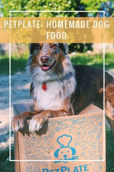 PetPlate Dog Food is fresh human grade quality food for your dog.  Ready to eat meals are delivered right to your door! Even picky dogs love this food.
