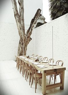 One of the private dining rooms at Hueso includes a dead tree that Cadena says sat in front of the building for six years. Initially, he was going to design a suite of custom chairs for the restaurant, each one with individual features, but he settled on classic Thonet chairs instead.    Courtesy of: Jaime Navarro