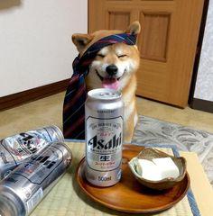Shiba Inu Berry knows how to let the good times roll!! #doge #shibainu #shiba #shibe