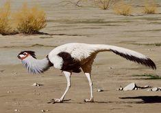 Avimimus portentosus, a beautiful feathered dinosaur.