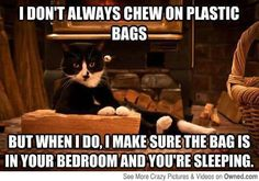 I don't always chew on plastic bags... #catoftheday